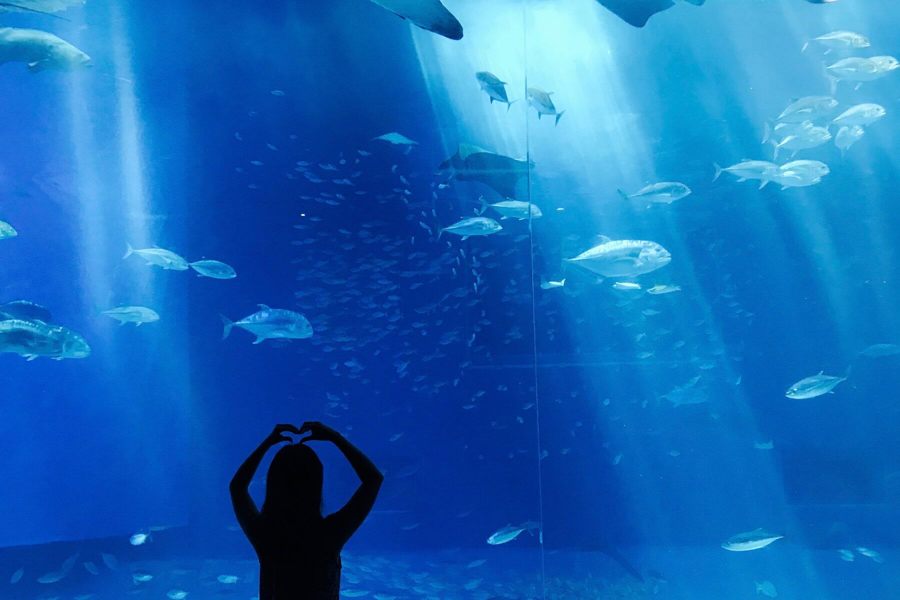 Nice Blue Aquarium Fish